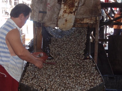 A final clean before the kerang are ready to go out